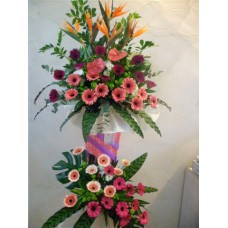Congratulation Floral 2 Tier Stand of Bird of Paradise, Anthurium and Gerberas