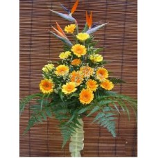 Congratulation Floral Stand of Gerberas and Bird of Paradise